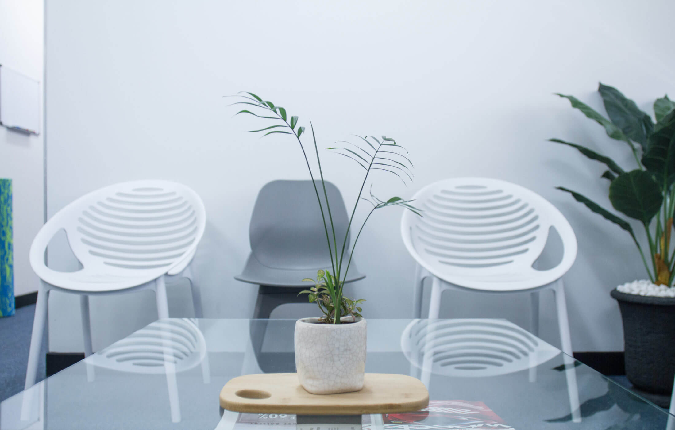 A center table with a plant as a decor in the table and three modern style chairs are situated near the wall.